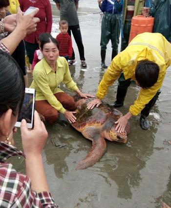 Ngư dân thả rùa hơn 60kg về biển 1