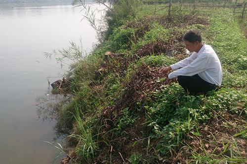 Ruộng vườn trôi sông vì cát tặc 1