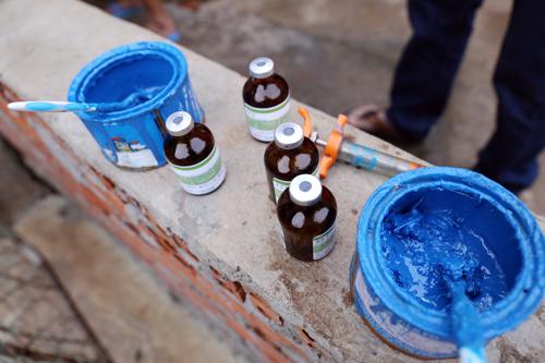 Hàng trăm con heo bị tiêm thuốc an thần trước khi vào lò mổ 2