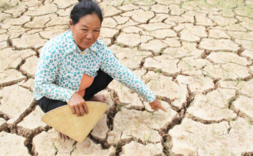 Ngày mai đồng bằng sông Cửu Long giảm mặn 1