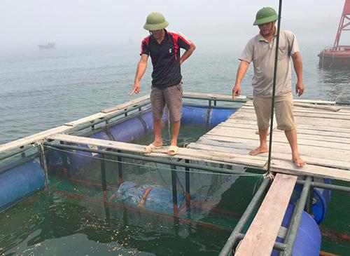 Cá chết trắng bè ở Khu kinh tế Vũng Áng 1