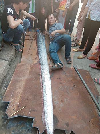 Cá hố dài gần 4 m trôi dạt vào bờ biển Nghệ An 1