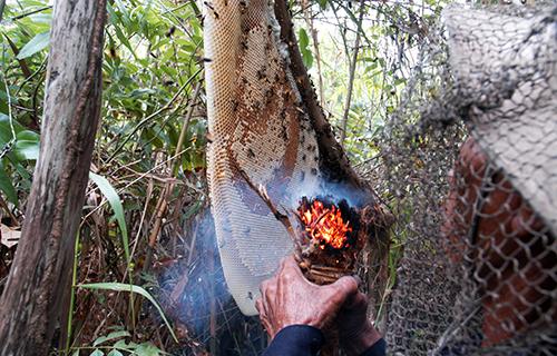 mật ong rừng, mật ong nguyên chất
