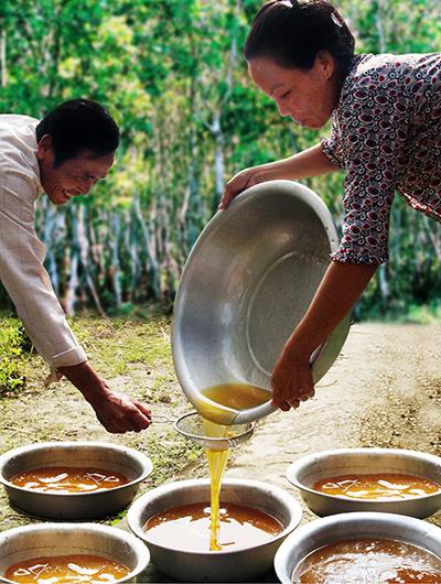 bán mật ong rừng, bán mật ong nguyên chất, bán mật ong thật