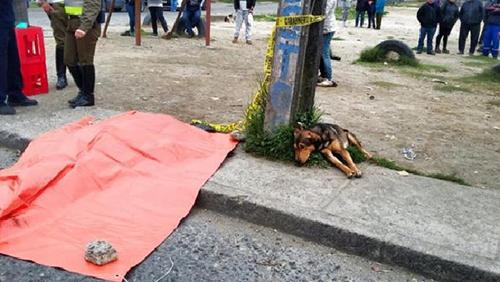 Chú chó Doki nằm dài buồn bã bên cạnh thi thể của cậu chủLeonardo Valdes