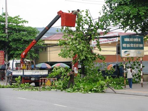 Quảng Ninh thay thế 8.000 cây xanh 1