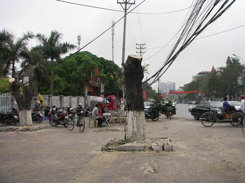 Quảng Ninh thay thế 8.000 cây xanh 2