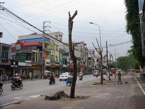 Quảng Ninh thay thế 8.000 cây xanh 3