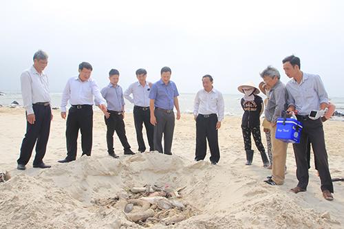 Nhiều tấn cá chết được chôn dọc bờ biển miền Trung 2