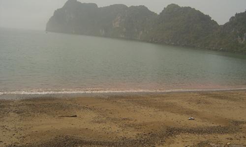 Thủy triều đỏ khi tràn vào bờ biển Bình Thuận. Ảnh: Viện Hải dương học Nha Trang.