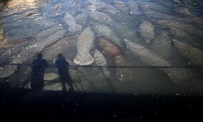 Cá chết hàng loạt 6