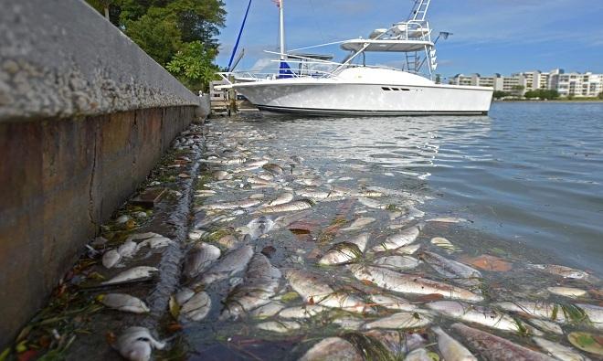 Cá chết hàng loạt 1