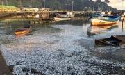 Tiêu hủy thủy hải sản chết thế nào?