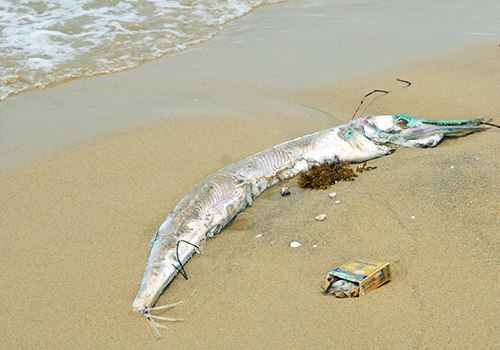 Đà Nẵng đối thoại với ngư dân, tiểu thương sau vụ cá chết 1