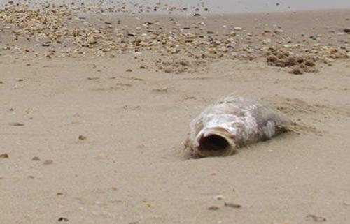 Thủ tướng chỉ đạo khẩn trương làm rõ nguyên nhân cá chết 1