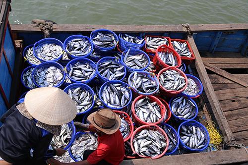 Được cấp chứng nhận, cá biển Quảng Trị vẫn hiếm người mua 1