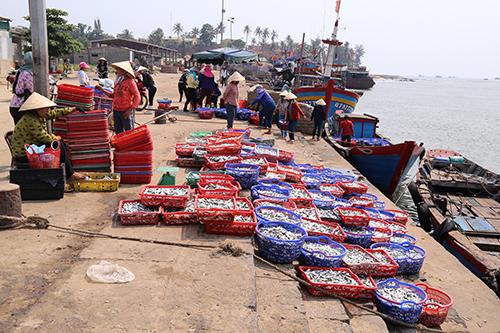 Được cấp chứng nhận, cá biển Quảng Trị vẫn hiếm người mua 2
