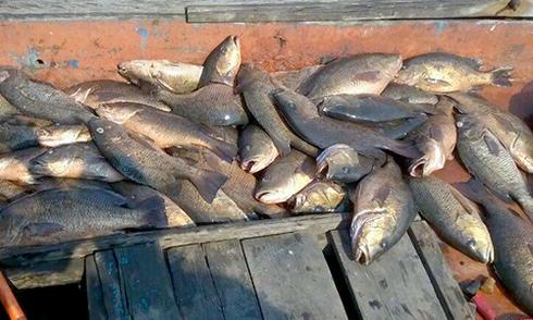 Cấm chế biến hải sản không an toàn ở 4 tỉnh miền Trung