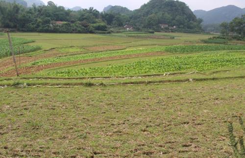 Ruộng đất bỏ hoang do thiếu hụt lao động nông thôn 1