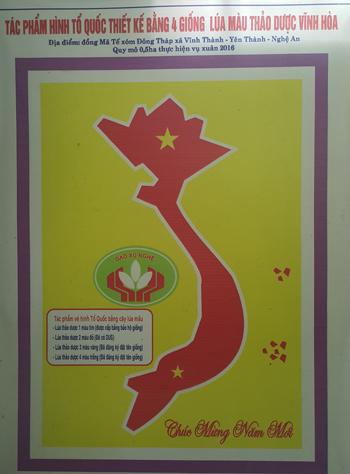 Bản đồ Việt Nam khổng lồ trên cánh đồng lúa 2
