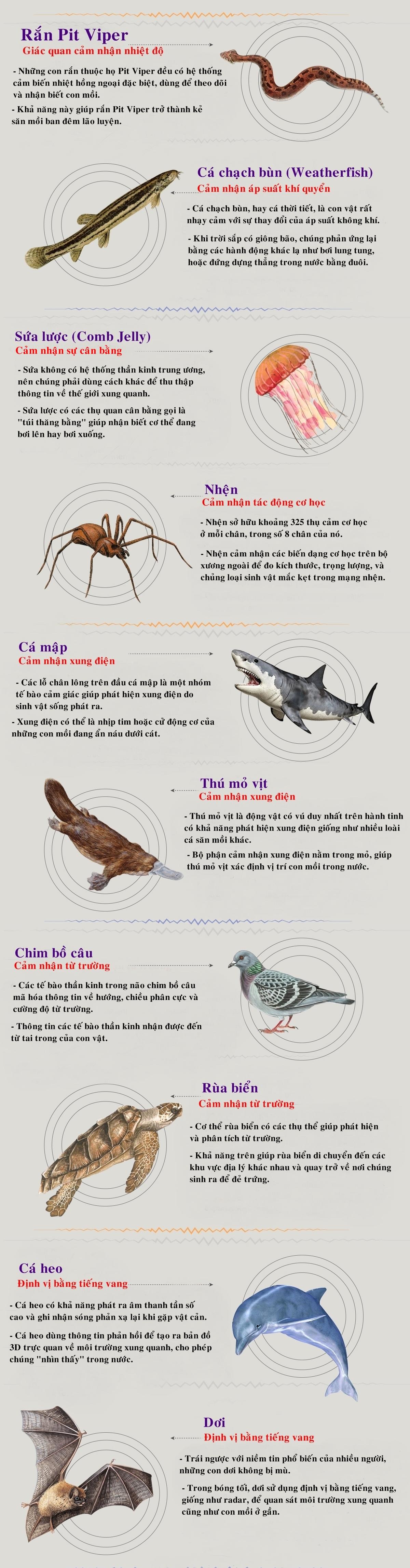 Giác quan thứ 6 trong thế giới động vật