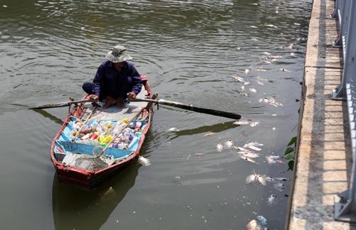 Cá chết trắng kênh Nhiêu Lộc 3