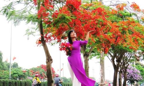 Đường hoa phượng dài nhất Việt Nam