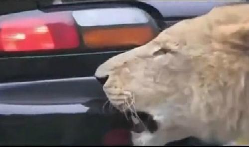 Hiểm họa chết người khi chạy nối đuôi trên cao tốc 4