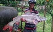 Nông dân mừng 'rớt nước mắt' vì câu được cá 1,3 triệu đồng