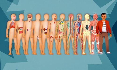 human-body-systems-image-8867-1465295112
