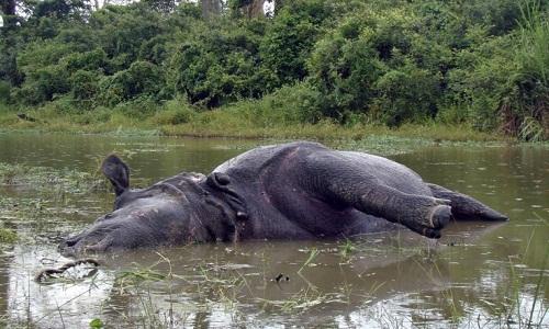 VNE-Rhino-6159-1465748175.jpg