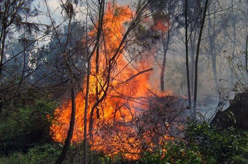 400 người dập tắt đám cháy rừng dưới trời nắng gắt 1