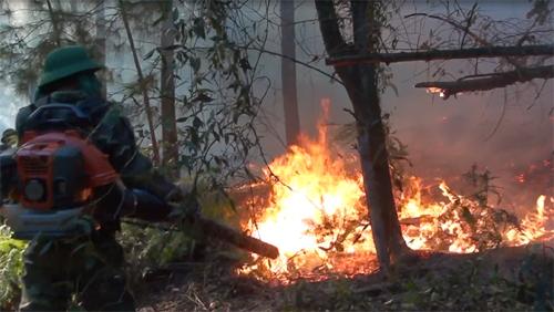 400 người dập tắt đám cháy rừng dưới trời nắng gắt 2