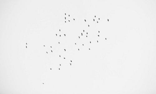 49-con-chim-xuat-hien-trong-le-tuong-niem-49-nan-nhan-vu-xa-sung-my