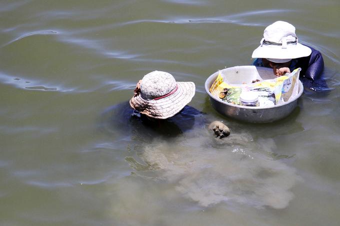 Ngâm mình dưới sông Hàn bắt nghêu, kiếm tiền triệu mỗi ngày