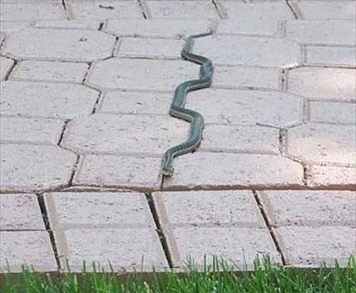 Con rắn nghiêm túc nhất năm - ảnh hài hot nhất facebook