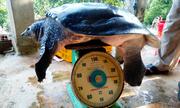 Ba ba nuôi 9 năm nặng 26 kg ở Đăk Lăk