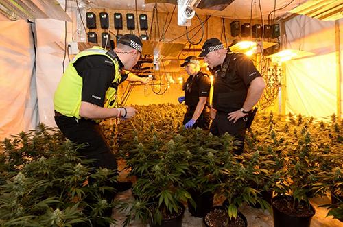 Cảnh sát Anh trong cuộc đột kích một trang trại cần sa của người Việt. Ảnh: Coventry Telegraph