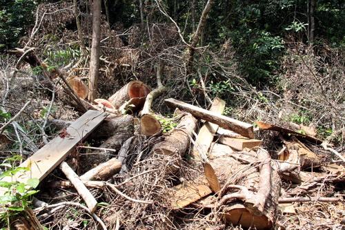 Rừng ven thủy điện Đồng Nai 5 bị phá nham nhở. Ảnh: Hoài Thanh