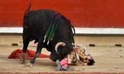Người đấu bò Tây Ban Nha bị húc chết trên truyền hình trực tiếp