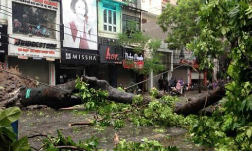 7 người chết và mất tích do bão Mirinae