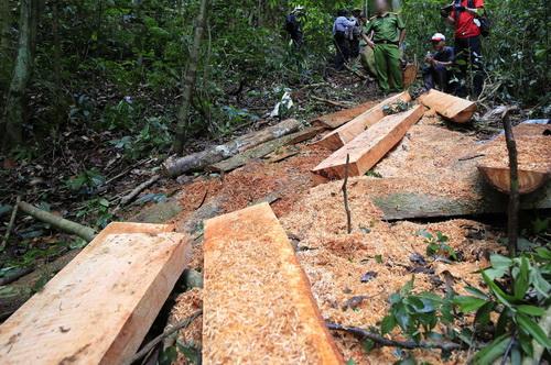 Nhiều cây gỗ được lâm tặc xẻ thành hộp để đưa về xuôi. Ảnh: Khánh Hương