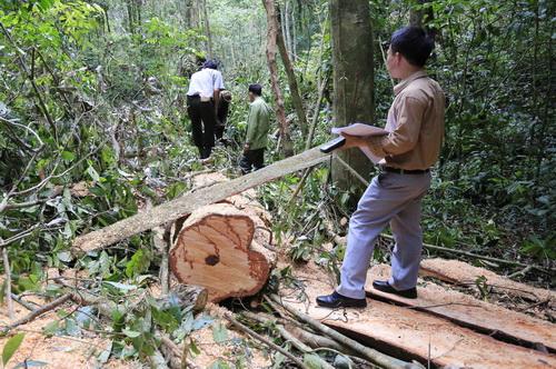 Cơ quan chức năng khám nghiệm hiện trường vụ phá rừng, chống người thi hành công vụ. Ảnh: Khánh Hương