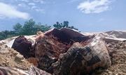 Đà Nẵng phát hiện một công ty chôn chất thải nghi độc hại