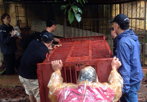 Các nhân viên Tổ chức Động vật Châu Á vận chuyển con gấu chó bị nhốt về trung tâm. Ảnh: