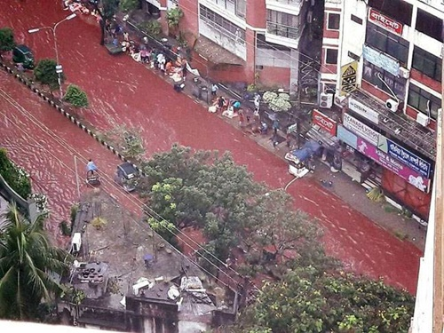 duong-pho-bangladesh-bien-thanh-song-mau-vi-le-hien-te-dong-vat