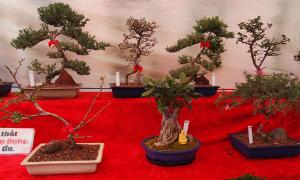 nguoi-dan-ong-dam-me-bien-kem-dong-thanh-cay-bonsai-11