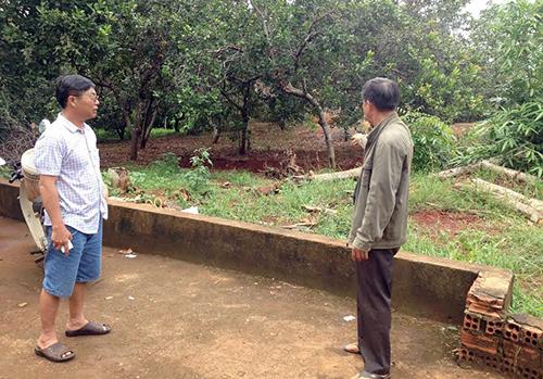 Vườn điều của bà Lý Thanh Luân bị Đoàn cưỡng chế thu hồi - ảnh: Văn Trăm
