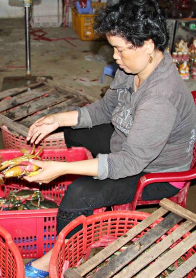 Nhiều hộ nuôi cua ở Cà Mau bại lỗ lã khi quăng quật tiền đầu tư thả nuôi rước ví cơ hội trung thu. Ảnh: Phúc Hưng