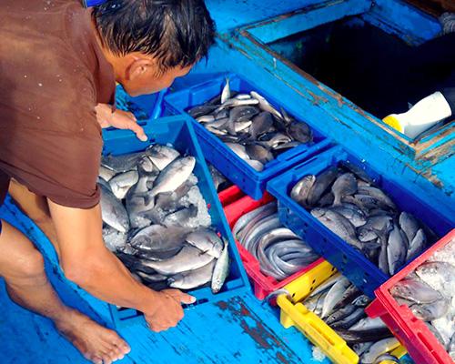 Thứ trưởng Nông nghiệp: Chuyển tiền hỗ trợ ngư dân trong tháng 10